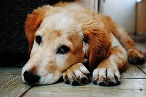 Adopt a Rescue Animal