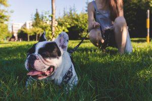 Volunteer to walk shelter dogs