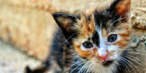 Donate the shelter animal adoption fee