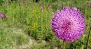 Plant native flowers or plants along highways