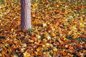 Help someone rake leaves