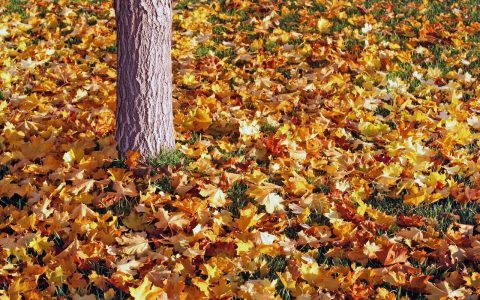 Help Someone Rake Leaves