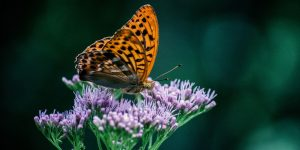 Start a butterfly garden in your community