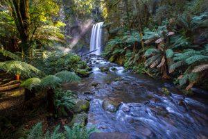 Adopt an acre of rainforest