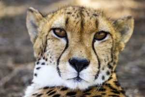 Sponsor an animal at your zoo