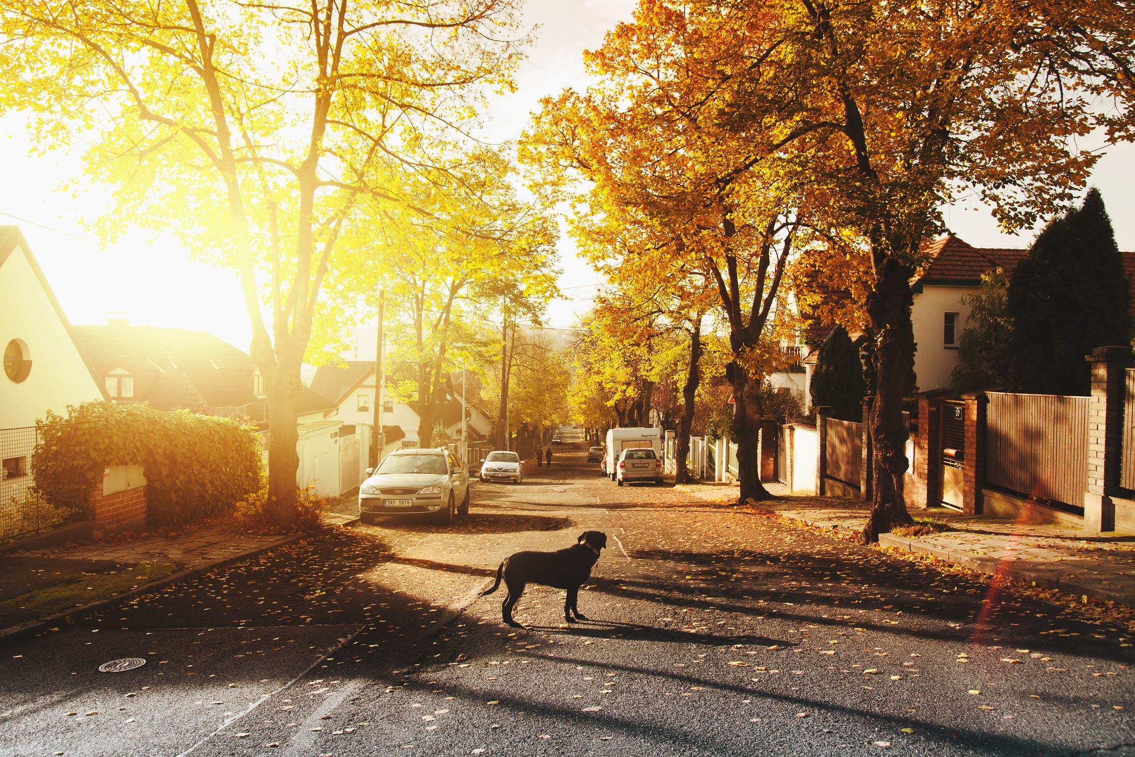 Help a roaming dog